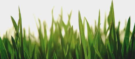 Två kommande noteringar för en miljövänligare värld