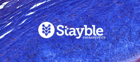 Stayble Therapeutics IPO får teckna-rekommendation av analytiker
